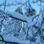 Branches Full of Snow