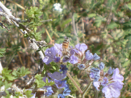 Busy Bee on Pusch Peak