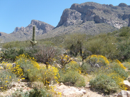 Pusch Ridge Wildflowers