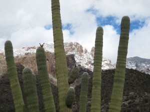 Finger Rock and Saguaro
