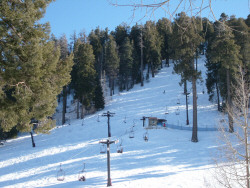 Ski Valley on Mt. Lemmon, February 2008