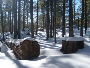 Mt. Lemmon, February 6, 2008